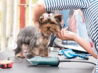 Hundeschermaschine Beitragsbild - Hund beim Frisör